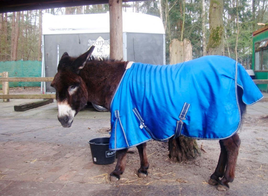 A Chocolate Donkey Takes A Supper Break To Look At A Stranger At Stichting De Ezelsociëteit