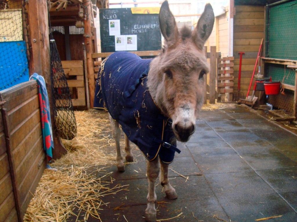 One Of The Lovely Donkeys At Stichting De Ezelsociëteit